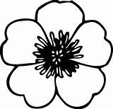 Poppy Flower Colouring Drawing Coloring Getdrawings sketch template