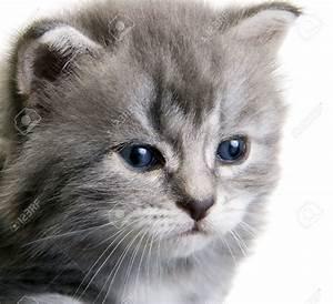 Laver Un Chaton : chaton trop mignon fond d39cran ~ Nature-et-papiers.com Idées de Décoration