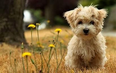 Puppy Desktop Wallpapers Backgrounds Wallpaperaccess