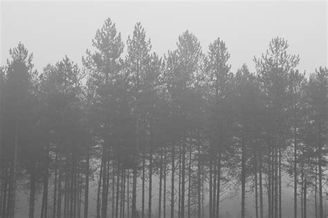 foggy forest background tumblr awesome black  white