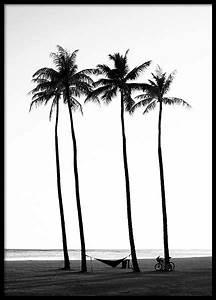 Palme Schwarz Weiß : poster schwarz wei schwarz wei bilder online bestellen desenio ~ Eleganceandgraceweddings.com Haus und Dekorationen