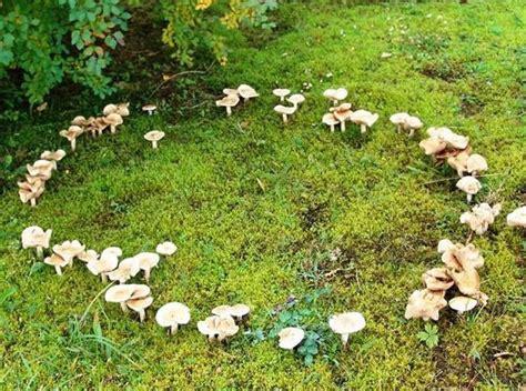 Einheimische Pilze Im Garten by Die Wunderbare Welt Der Magischen Wesen Witchmagies