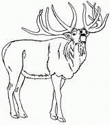 Coloring Elk Mountain Rocky Printable Deer North Popular Colornimbus sketch template