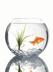 Empty Goldfish Bowl - ClipArt Best