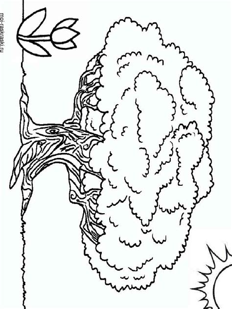 Tree Template Coloring Sheets by African Tree Coloring Sheets Coloring Pages