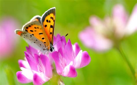 Explore and download tons of high quality flower wallpapers all for free! Beautiful Butterflies and Flowers Wallpapers (56+ images)