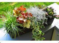 Balkonkästen Winterhart Bepflanzen : bepflanzter balkonkasten 80 cm wintergr n im ~ Lizthompson.info Haus und Dekorationen