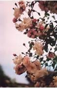 vintage flowers on Tum...Vintage Flowers Tumblr