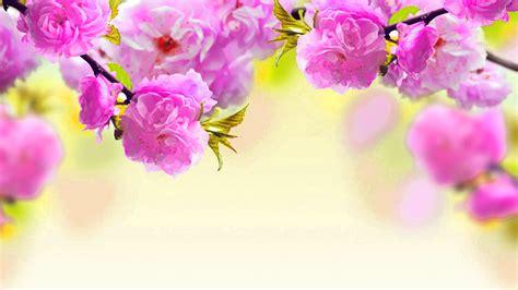 desktop pc wallpaper pictures images  pics hd