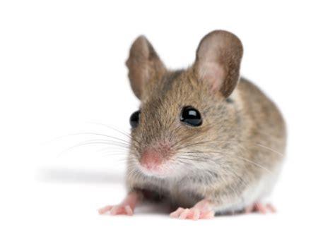 Tips Kandungan 6 Bulan Lakukan 4 Langkah Ini Untuk Hindari Penyakit Kencing Tikus