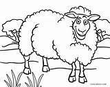 Sheep Coloring Face Pages Printable Cool2bkids Getdrawings Drawing sketch template