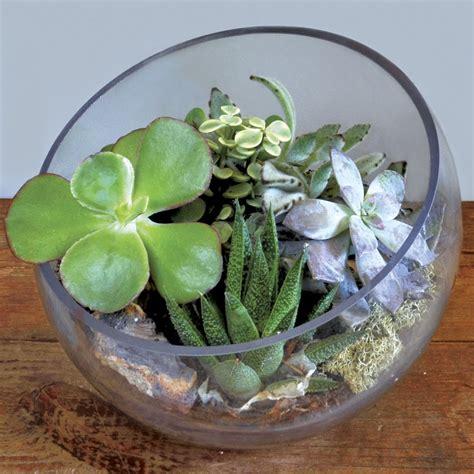 summer house succulent terrarium bowl at jackson and perkins