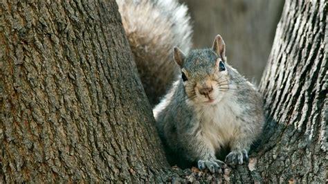 Backyard Animals by Make A List Of Animals