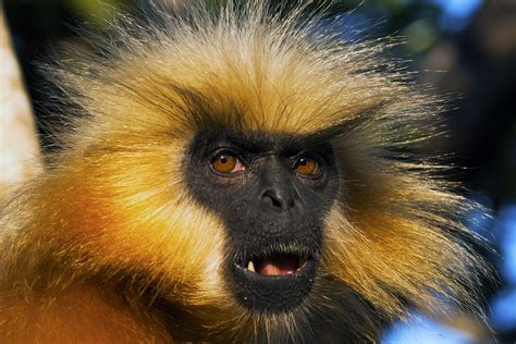 Scientists Discover New Species Of Monkey  National Geographic Education Blog