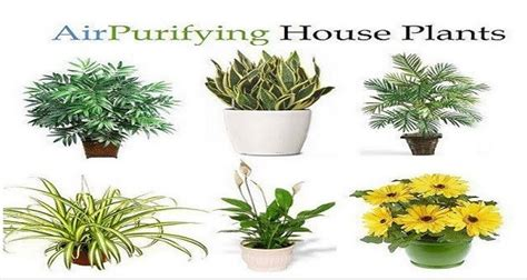 Plants For Bathroom India by 8 Impossible To Kill Plants That Clean The Air In Your Home