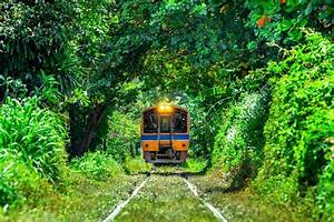 Train Running In Tree Tunnel On The Railway In Bangkok Thailand  Stock Photo