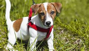 Dog Harnesses  The Ultimate Dog Owner U0026 39 S Buying Guide