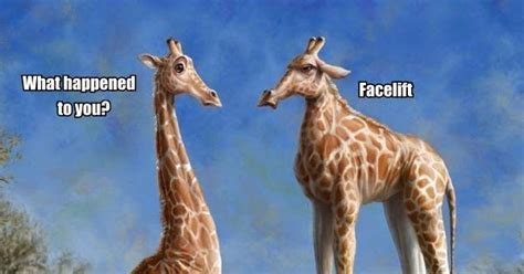Silly Bunt : Giraffe Cosmetic Surgery Fail