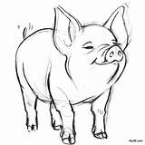 Pig Coloring Smiling Drawing Drawings Pages Pencil Animals Sketches Wilbur Sketch Easy Web Animal 4to40 Pigs Piggy Piglet Charlotte Draw sketch template