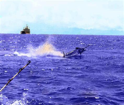 ocean fishing marlin fishing boating  fishing