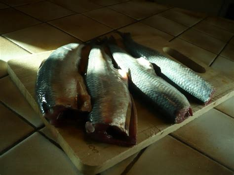 cuisiner le hareng frais harengs frais au four le de titanique