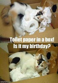 Funny Cat Birthday Memes