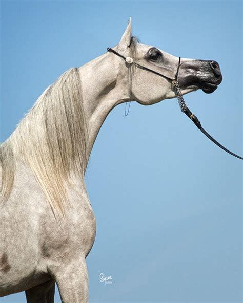 horse throatlatch slinkies slinky neck area horses sweat helps