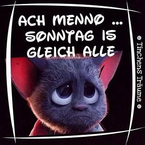 Lustige Bilder Sonntag : lustige tiere bilder katzen lustige ausmalbilder ~ Frokenaadalensverden.com Haus und Dekorationen