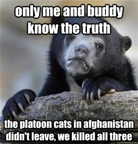 Truth Bear Meme - only me and buddy know the truth the platoon cats in afghanistan didn t leave we killed all