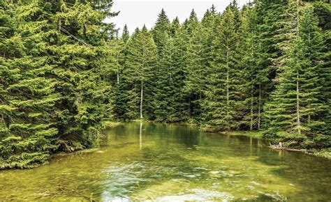 river forest nature wall paper mural buy at europosters