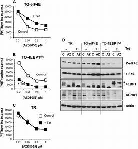 Adaptation To Mtor Kinase Inhibitors By Amplification Of