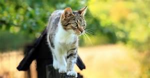 Katzen Aus Garten Vertreiben : katzen vertreiben tipps zur katzenabwehr mein sch ner garten ~ Frokenaadalensverden.com Haus und Dekorationen