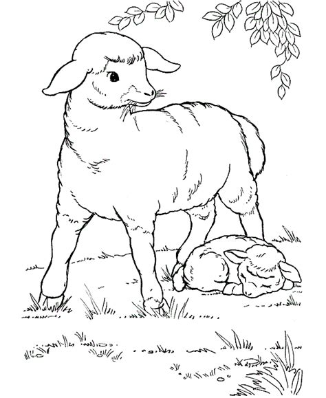 art sheep color page