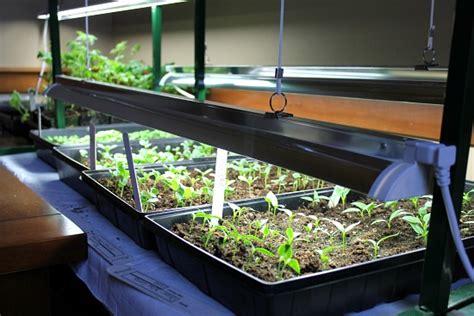 seed starter grow lights how to start seeds using grow lights one hundred dollars