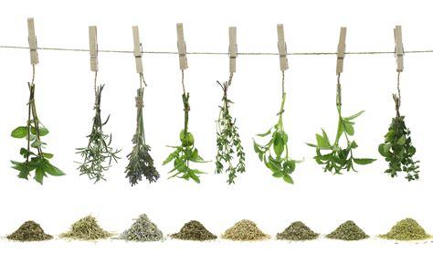 plantes aromatiques cuisine 8 herbes aromatiques à avoir impérativement dans sa cuisine
