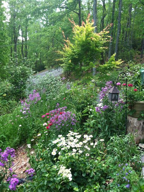 woodland gardening woodland garden made in the shade gardens pinterest