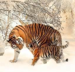 10 Most Beautiful Animals in the World