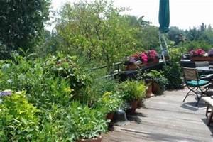 Wann Balkon Bepflanzen : wie sie ihre orchideen richtig pflegen planungswelten ~ Frokenaadalensverden.com Haus und Dekorationen