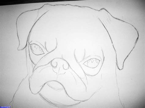 realistic pug drawing easy easy realistic drawing