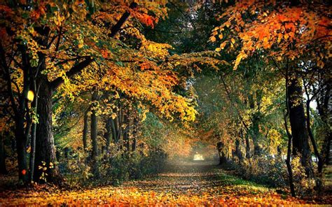 Autumn Wallpaper by Autumn Road Nature Wallpapers Wallpapers High