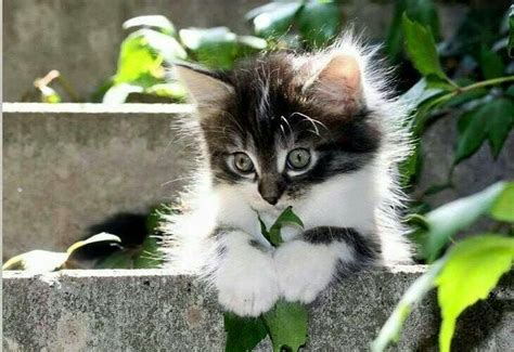 Tappezzeria Gatti Angelillo Gatos Y Gatos Amo A Los Gatos