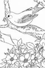 Goldfinch Coloring Willow Template Pages sketch template