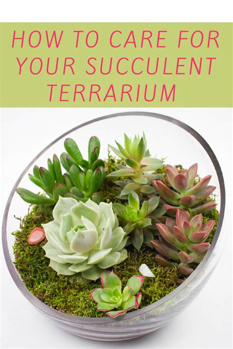 how to take care of a succulent how to care for succulents in terrariums terraria