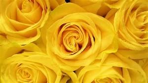 30 yellow aesthetic wallpapers wallpaperboat
