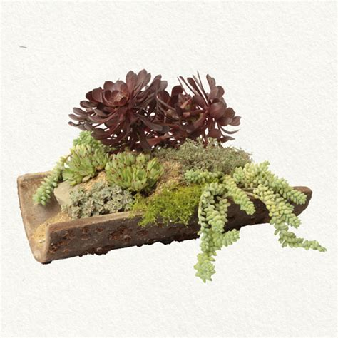 roof tile succulent garden sweet greens