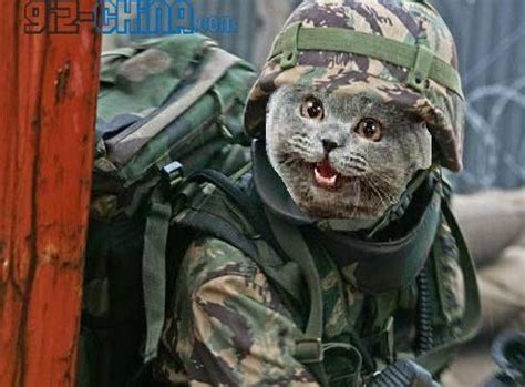 disney unleashes cat army on the happiest place on earth