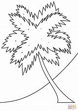 Coloring Pages Palm Tree Beach Coconut Printable Trees Seasons Drawing Strange Coloringpagesonly Paper Through Getcolorings Tutorials sketch template
