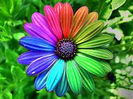 Colorful Flower Photography