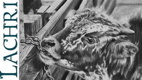 time lapse graphite pencil tutorial baby texas longhorn