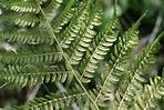 Seedless Vascular Plants, Nonvascular Plants & Nature ...